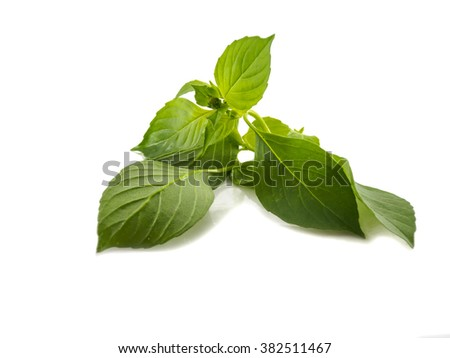 Fresh basil leaf vegetable of isolated, on white background