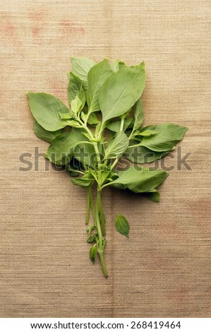 Fresh Basil on Natural Background - stock photo