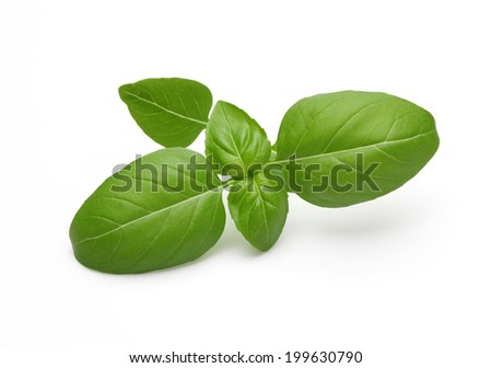 Fresh basil sprig on white surface with smooth shadows. - stock photo
