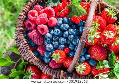 Fresh berries in garden - stock photo