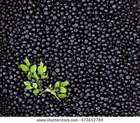 Fresh bilberry (Vaccinium myrtillus) with leaves. Texture