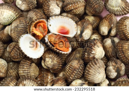 Fresh Blood Cockles market edible background - stock photo