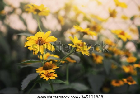 fresh blooming bright yellow flowers - stock photo