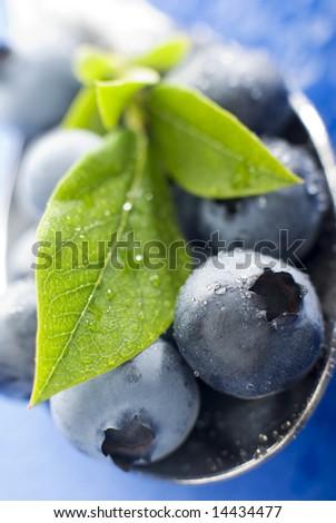 fresh blue berry fruit close up shoot - stock photo