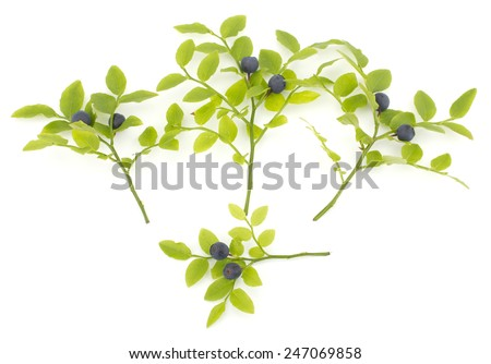 Fresh blueberries with leaves isolated on white background - stock photo