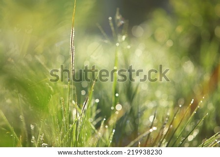 Fresh blurry  green grass with water droplet in sunshine - stock photo