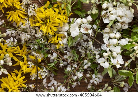 Fresh branches of Forsythia and apple tree with white and yellow flowers and fresh green leaves on wooden background as a studio close up and spring image - stock photo