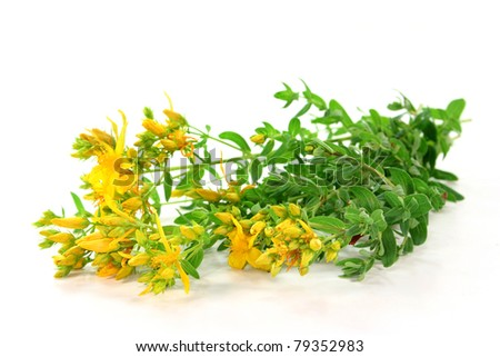 fresh branches St. John's wort on a white background - stock photo