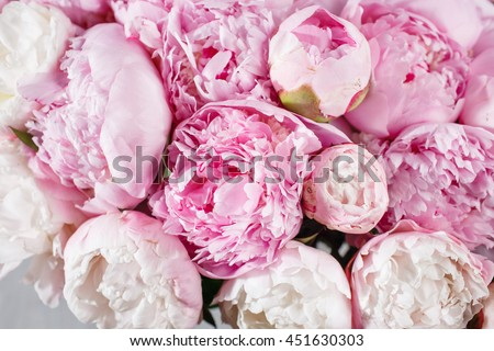 Fresh bright blooming peonies flowers dew stock photo royalty free fresh bright blooming peonies flowers with dew drops on petals white and pink bud mightylinksfo