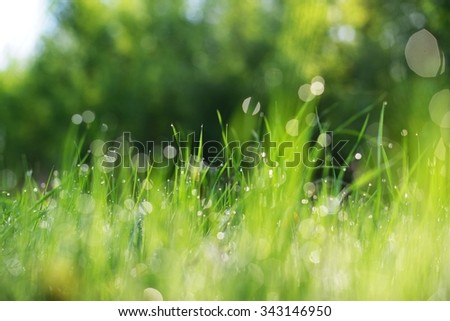 Fresh brightly green weed with morning dew drops selective focus - stock photo