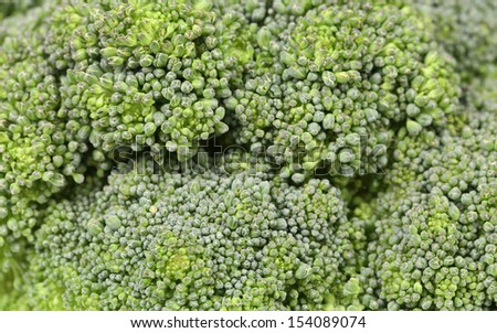 Fresh broccoli in close up. - stock photo