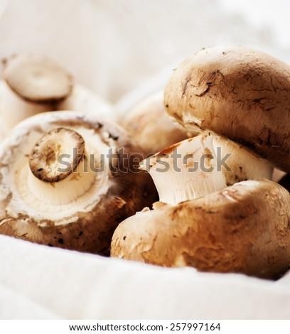 Fresh brown mushrooms - stock photo