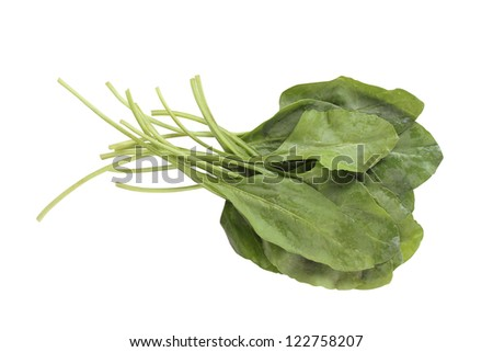 Fresh bunch of organic spinach isolated on white background