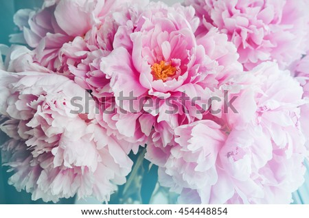 Fresh bunch of pink peonies peony roses flowers, white with blue effect shine. Pastel floral wallpaper, background from flower petals. Trendy color. Bloom love concept. Card, text place, copy space. - stock photo