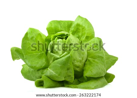 Fresh butterhead salad isolated on white background - stock photo