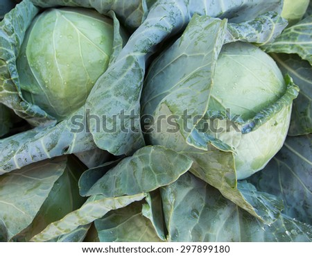 Fresh Cabbages at the market - stock photo