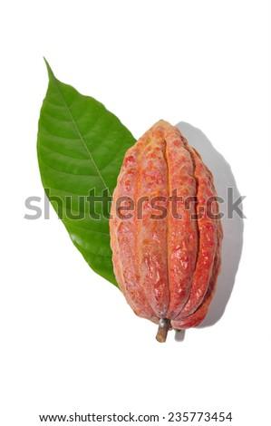 Fresh cacao fruit on background - stock photo