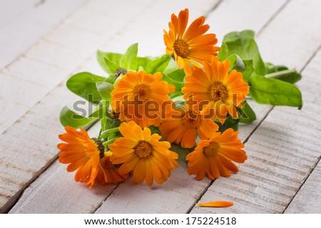 Fresh calendula flowers on white wooden background. Selective focus. - stock photo