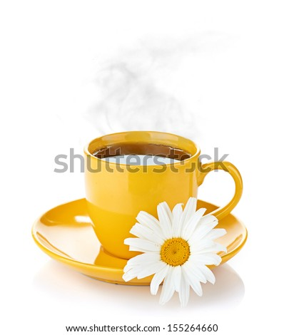 fresh camomile flowers - stock photo