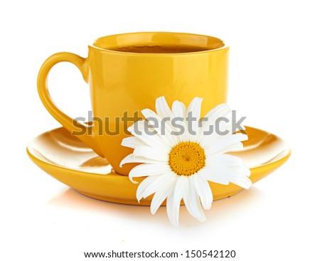 fresh camomile flowers and camomile herbal tea - stock photo