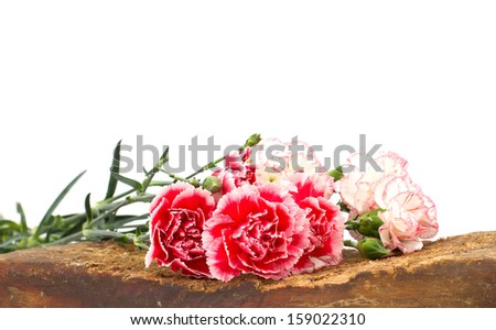 Fresh carnations on old wooden background. - stock photo