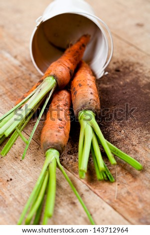 fresh carrots bunch and bucket on wooden background