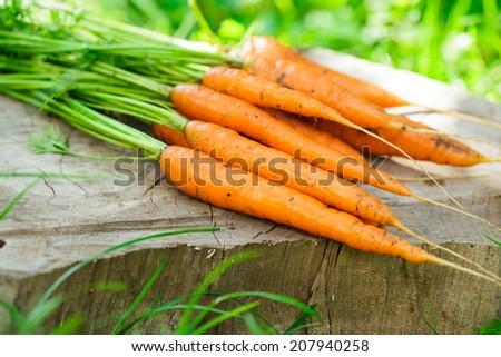 Fresh carrots from the garden, still life outdoor - stock photo