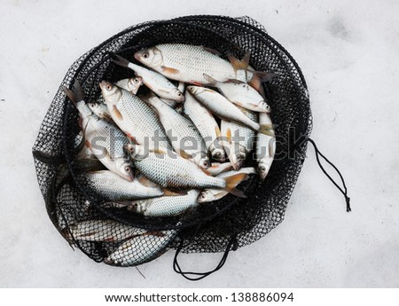 Fresh catch - a lot of fish in net cage on snow - stock photo