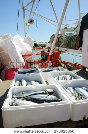Fresh catch of mackerel fish in styrofoam containers on fishing boat.  Trouville-sur-Mer (Normandy, France).  - stock photo