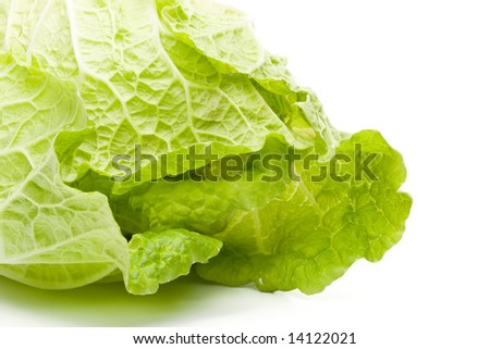 Fresh celery cabbage on a white background