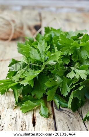 Fresh celery leaves - stock photo