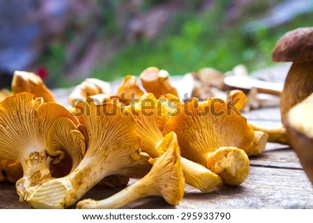 Fresh Chanterelle and Boletus Edilus mushrooms on a wooden table - stock photo