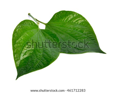 Fresh chaplo leaves or piperaceae isolated on white background