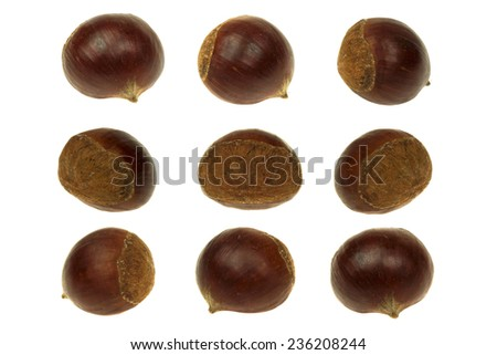 Fresh chestnut isolated 360 Degrees Concept