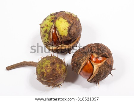 Fresh chestnut isolated on a white background.