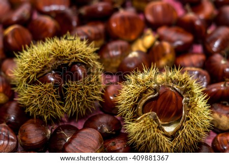 Fresh chestnuts inside their burs
