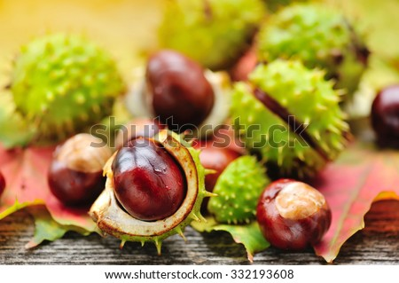 Fresh chestnuts on background autumn leaves - stock photo