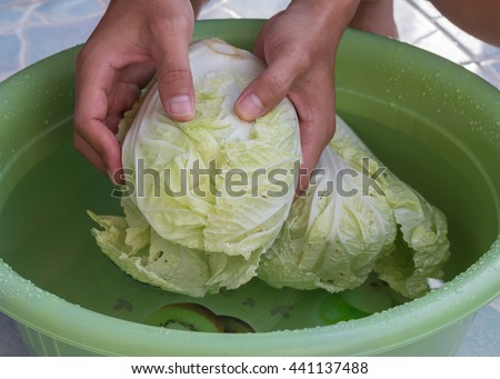 fresh Chinese Cabbage in hand, the man cleaning Chinese Cabbage. - stock photo