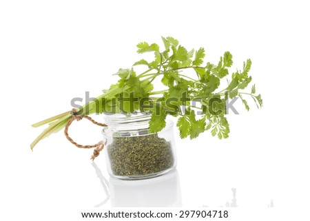 Fresh cilantro and dry coriander spice in glass jar isolated on white background. Culinary healthy aromatic herbs. Culinary arts. - stock photo
