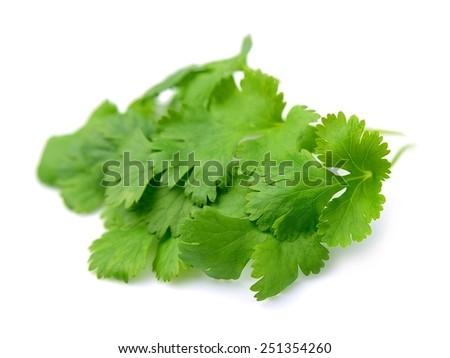 Fresh cilantro close up on white - stock photo