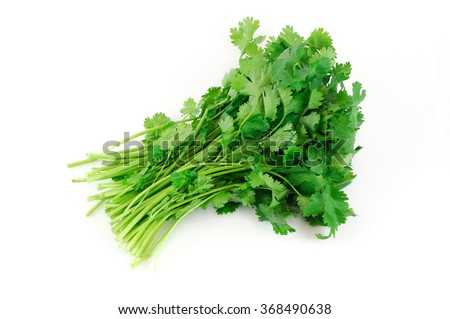 fresh cilantro coriander isolated on white background - stock photo