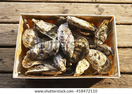 Fresh closed oyster on wood table - stock photo