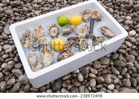 Fresh closed oysters on ice in a white box, with lemon and a knife - stock photo