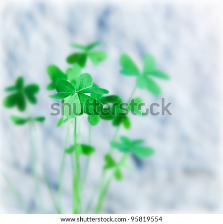 Fresh clover leaves, green spring floral plant, lucky shamrock, St.Patrick's day holiday symbol, abstract natural background, shallow depth - stock photo