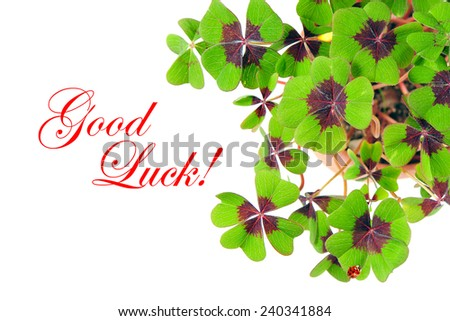 fresh clover plant. green shamrock leaves. greetings card concept with sample text Good Luck! - stock photo