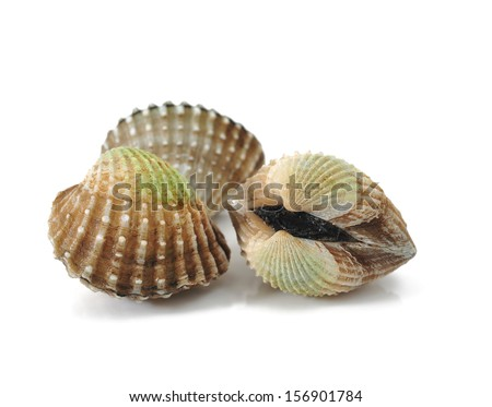 fresh cockles isolated on white
