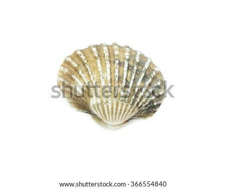 fresh cockles  on white background - stock photo