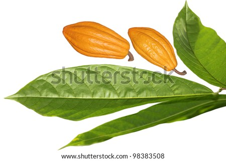 Fresh cocoa cacao bean fruit and leaves isolated on white background - stock photo