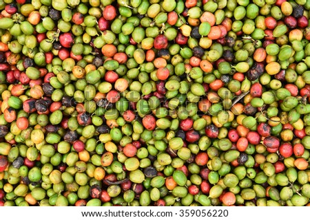 fresh coffee beans before roast. - stock photo
