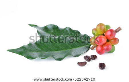fresh coffee beans isolated on white background